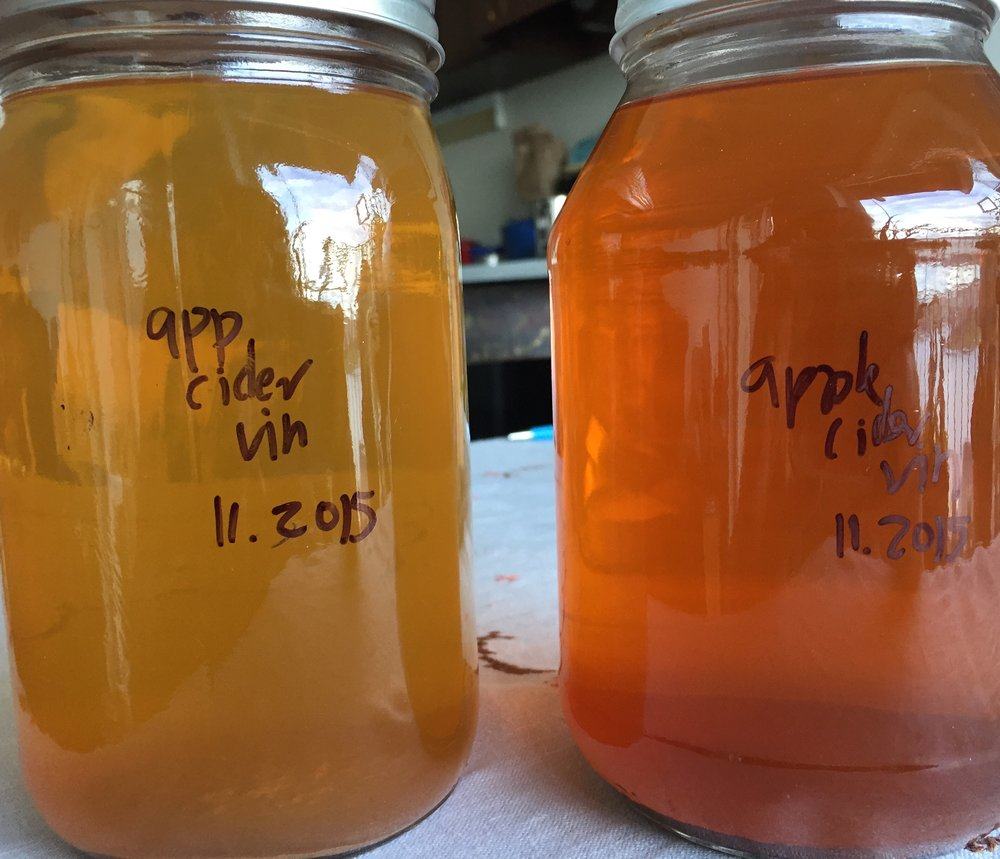 finished homemade apple cider vinegar