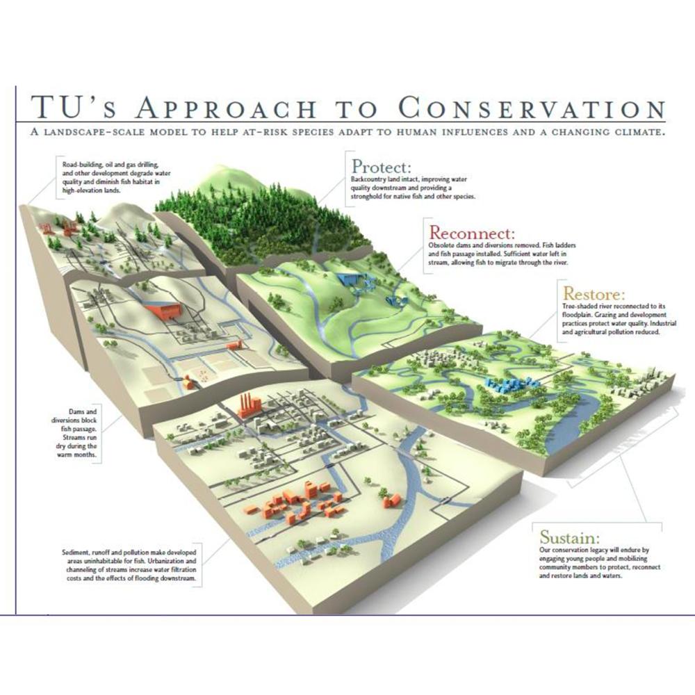 TU_conservation.png