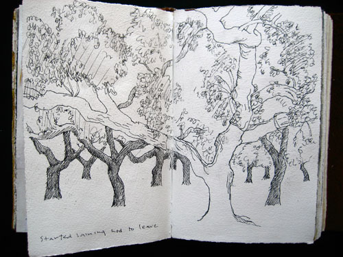 log page - grove of ubiquitous cork oak trees - so human and personal each one should have a name.