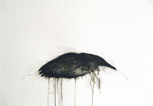 blog pigeon 3