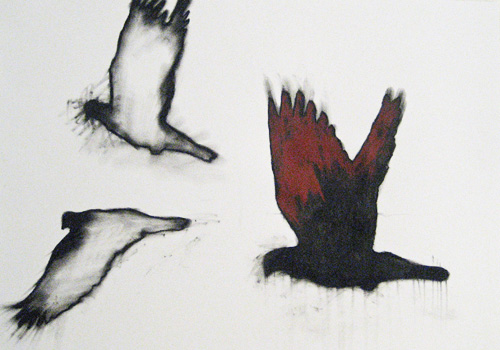 blog pigeons