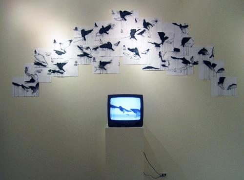 blog pigeon wall
