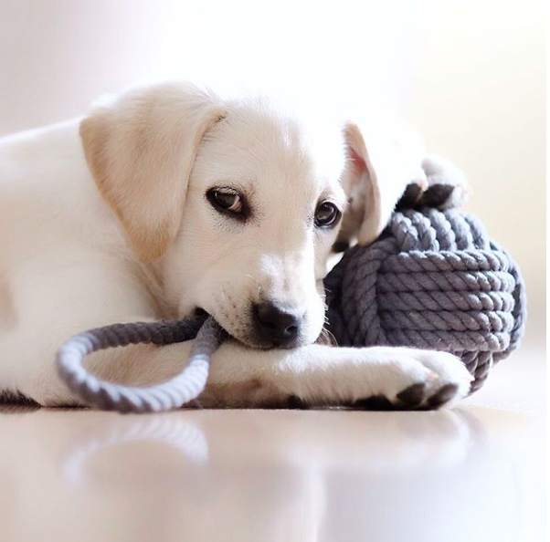 Monkey Fist Rope Dog Toy   A rope covered tennis ball for your dog. Throw it, tug it, your dog will love it!  $19.99