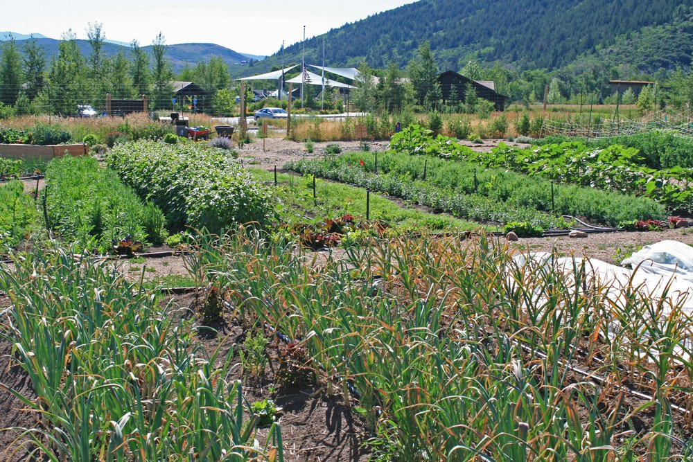 Grow - Become a Community Gardener - Sign Up Today!