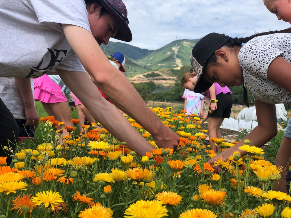Bridger, Campers, Looking for Bugs in Flowers.jpg