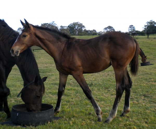 Good Project as a foal at foot