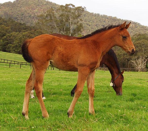 Geecup as a foal