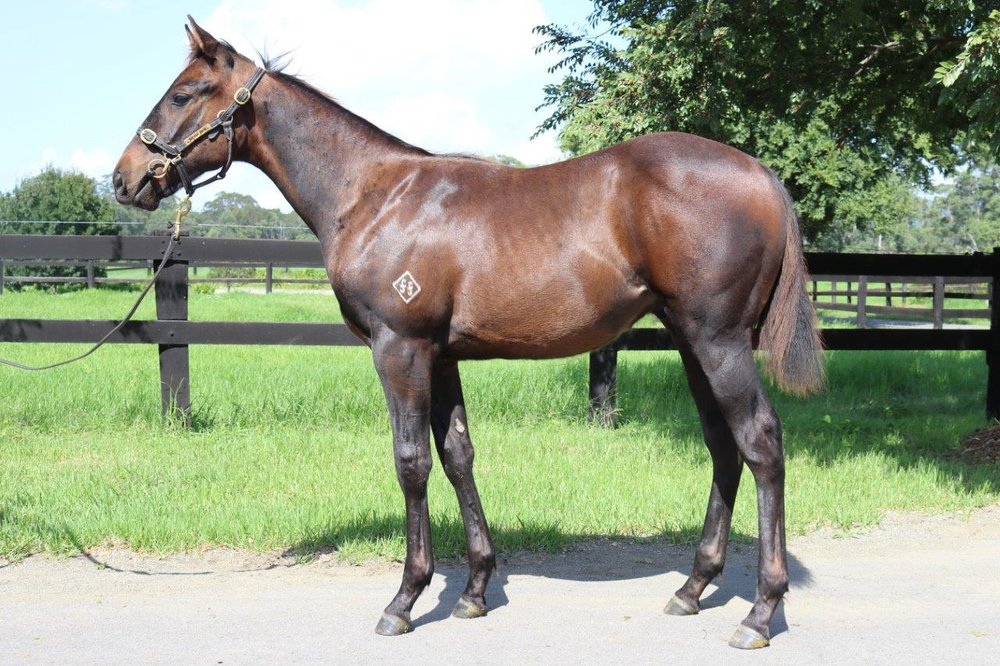Unencumbered colt out of Catastrophe.