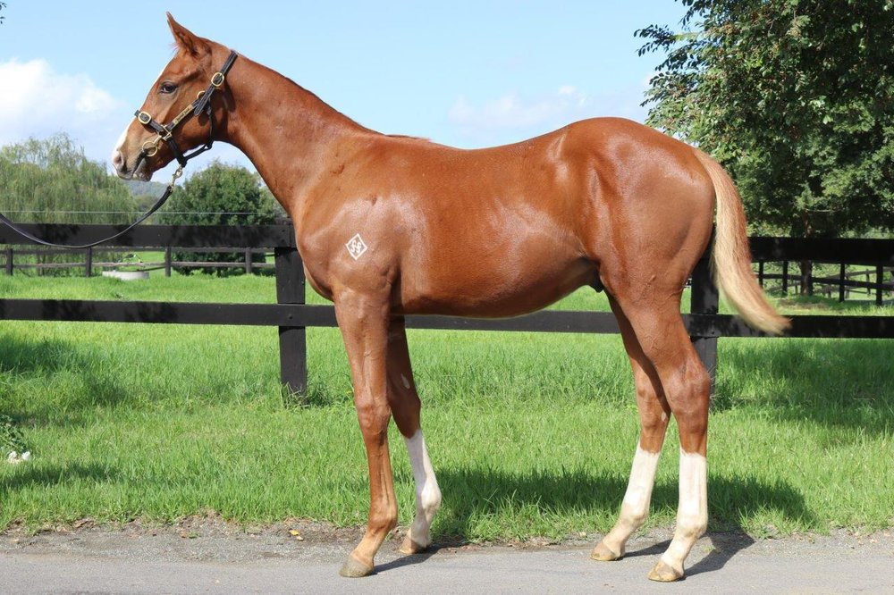 Brightlands Star 2017 colt.jpg