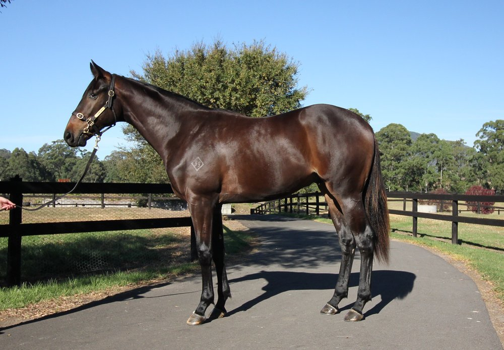 Bart as a yearling