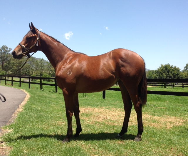 Reprimand as a yearling