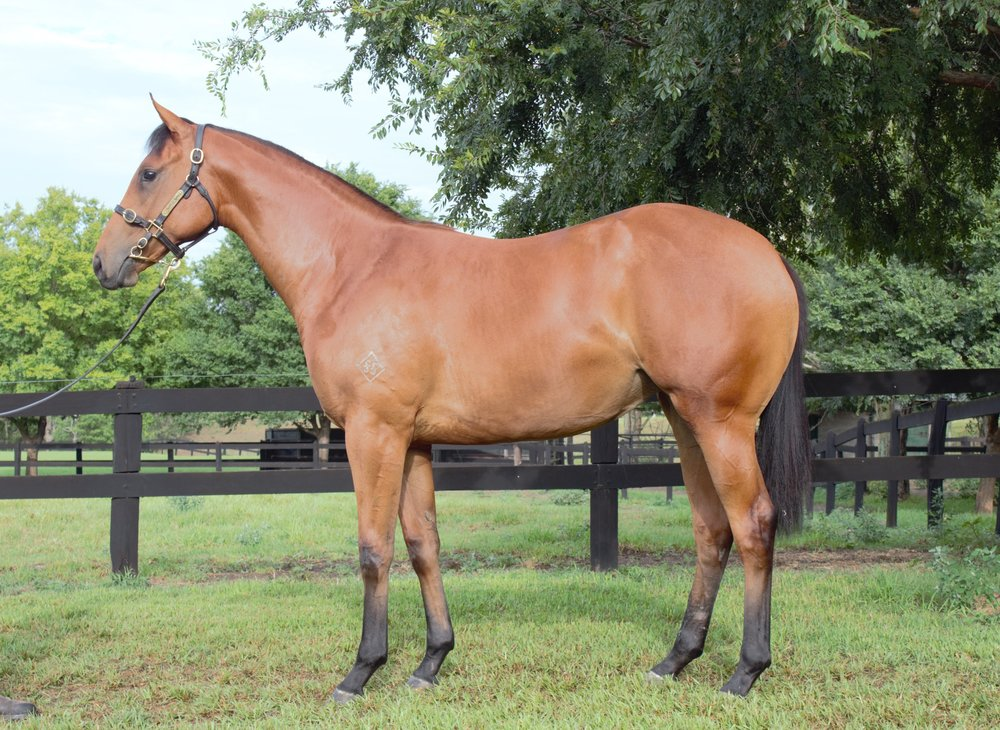Fiesta as a yearling