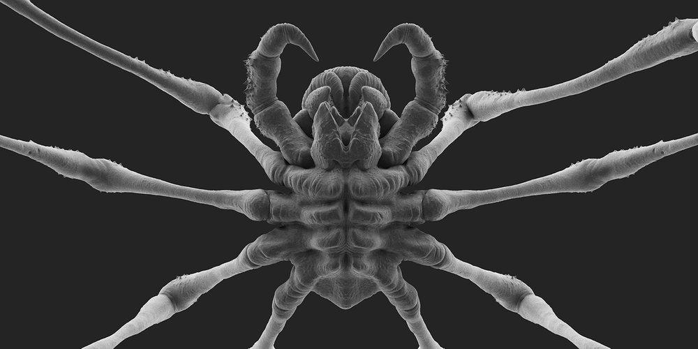 Spider_v004.105.jpg