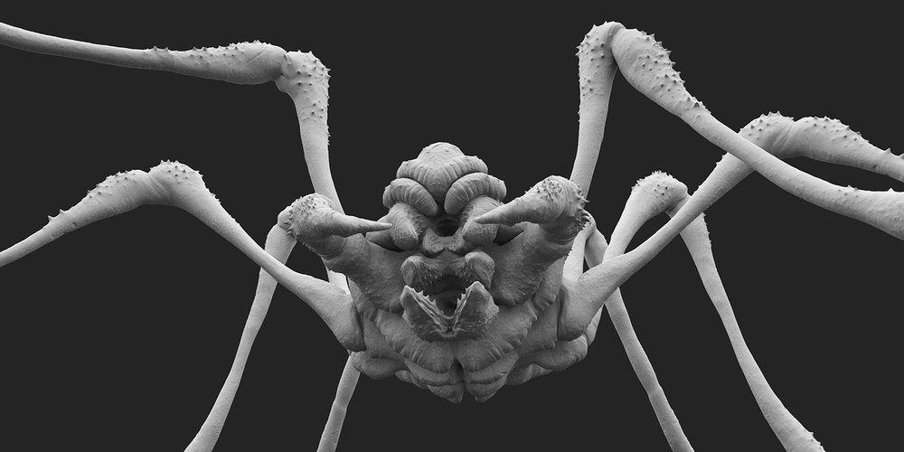 Spider_v004.103.jpg