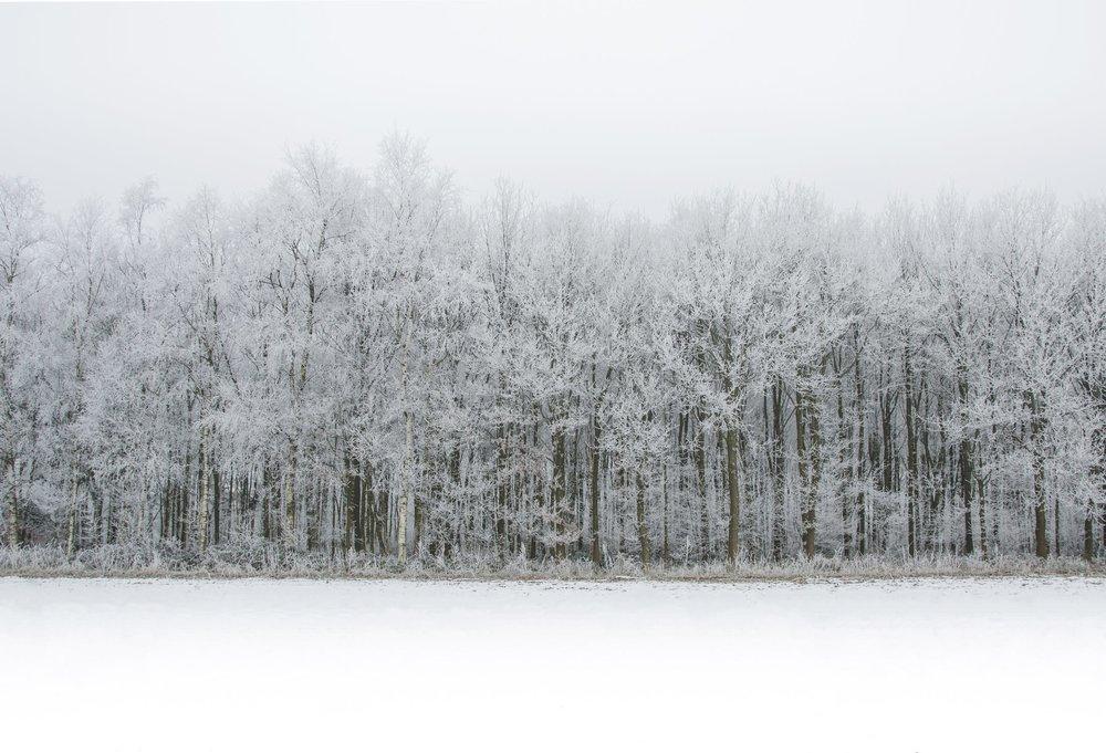 Forest 2.jpeg