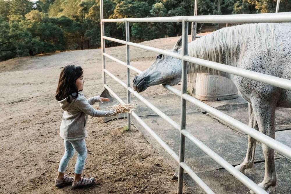 Visit Rescued Animals on Your Sindisa Glamping Retreat