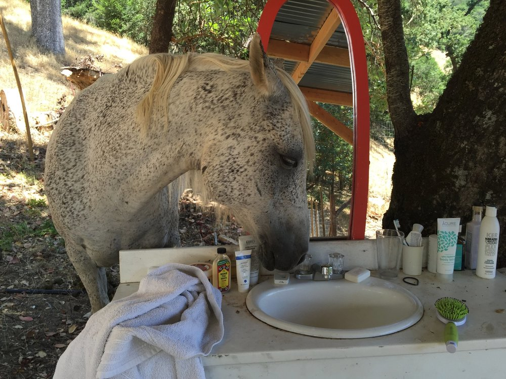 Sindisa Sanctuary Rescue Animals Enjoy Northern California's Best Glamping Spot