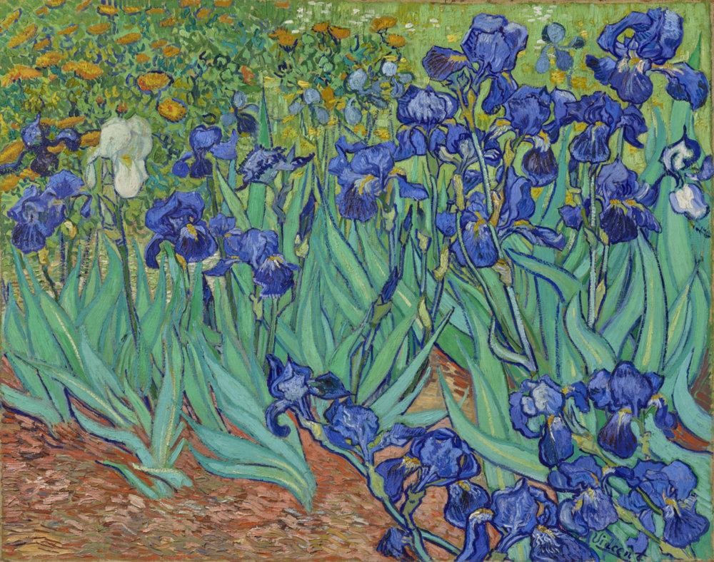 Vincent Van Gogh,  Irises , 1889