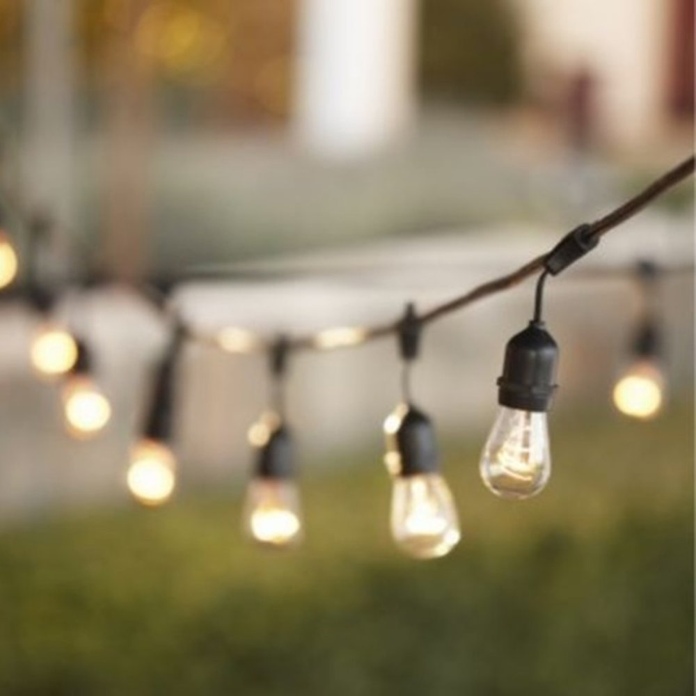 50' black corded edison lights - 10 available