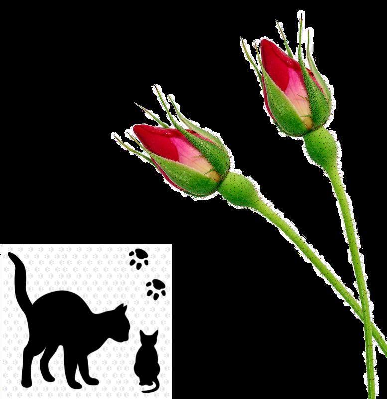 Cat kitten sil small_InPixio.png