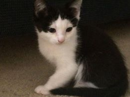 Jasper - Lily's handsome son...