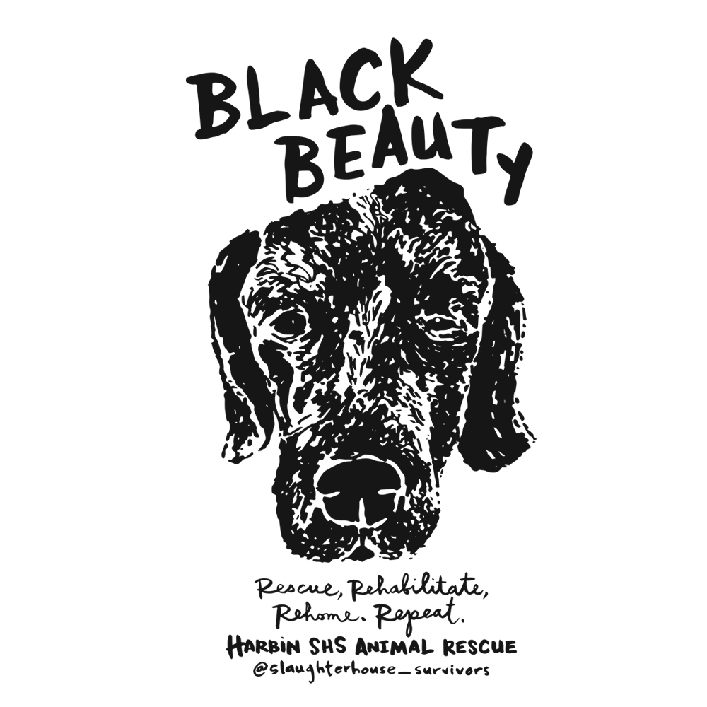 sq.black.beauty.jpg