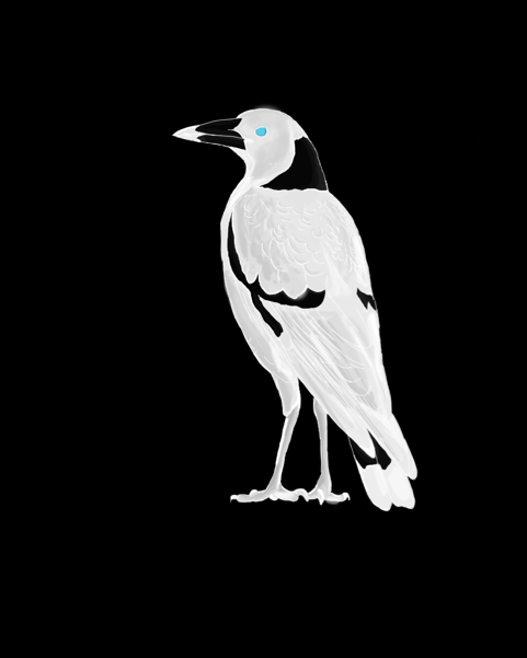 magpie2.png