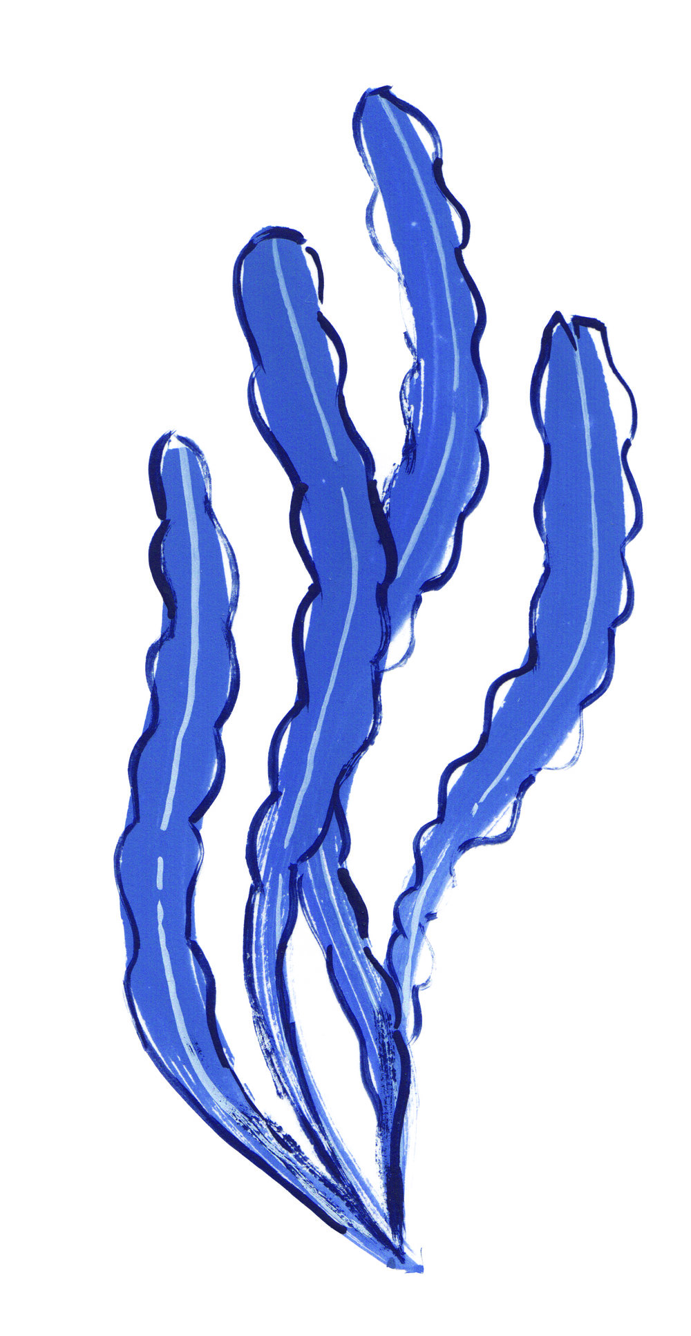 LongBlue.jpg