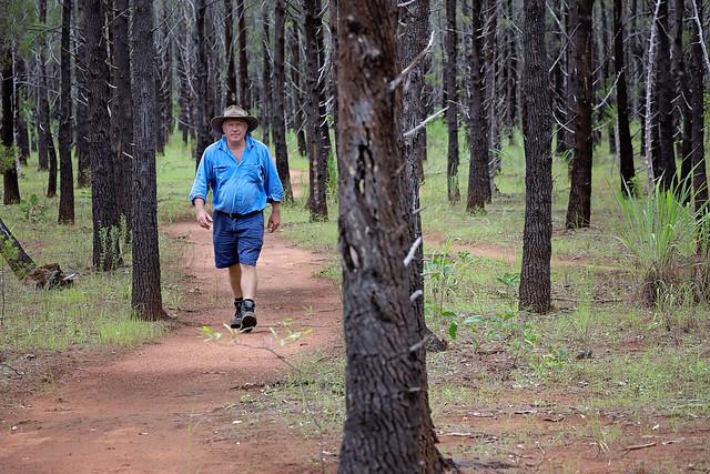 forêt Young Living Australie