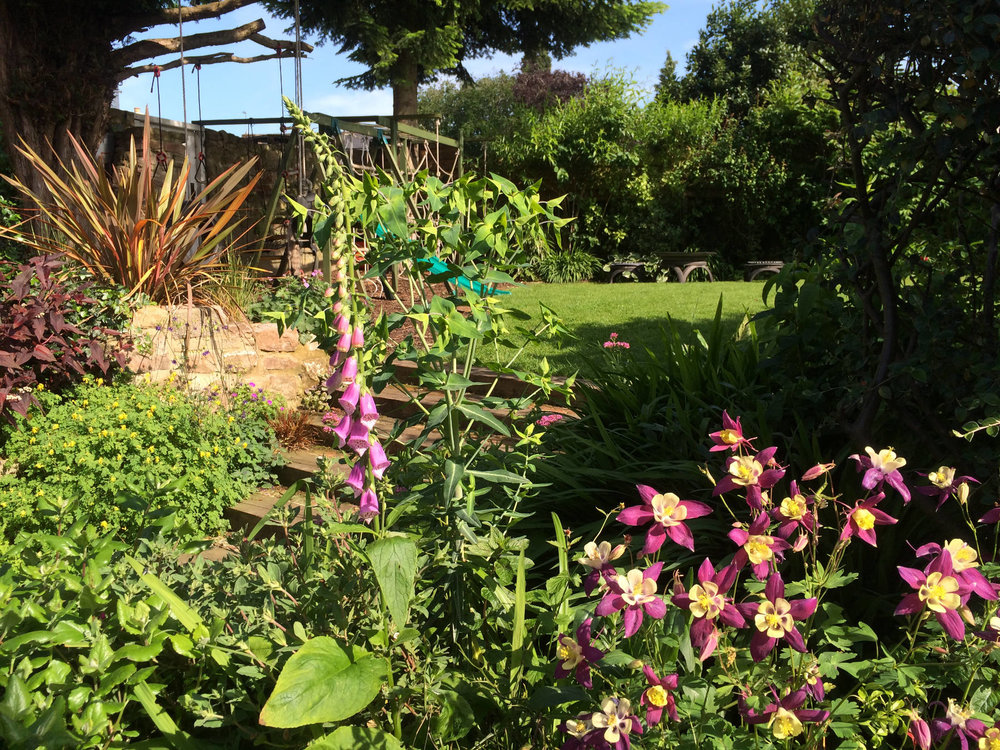 garden summer (3).jpg