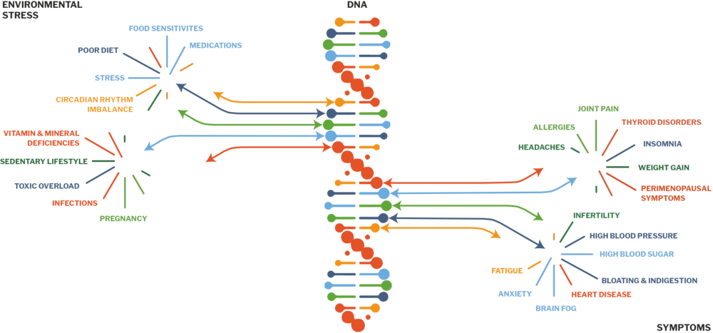 DNA-TREE-COMP-3.png