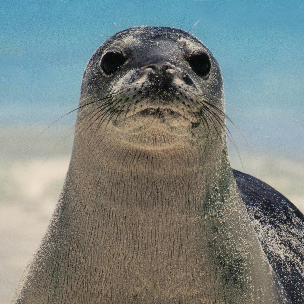 1982: De Zeehond   Symbolische snor van het jaar.