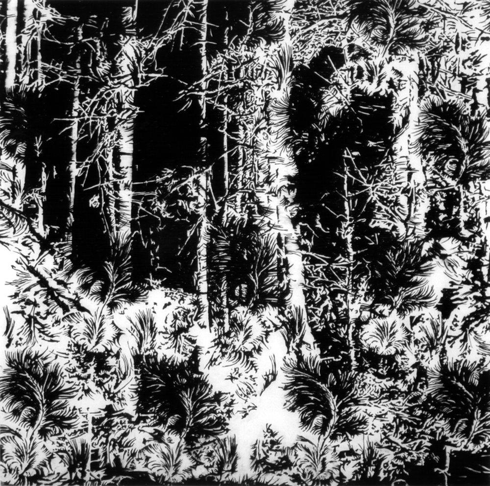 o.T. (Wald) , Kohle auf Papier,151cm x 151cm, 2002