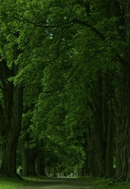woodlawnroad.jpg