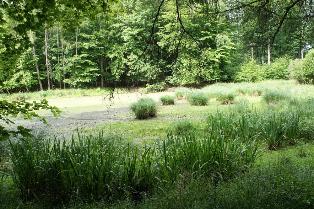 Mecklenburger Sumpfsurvival