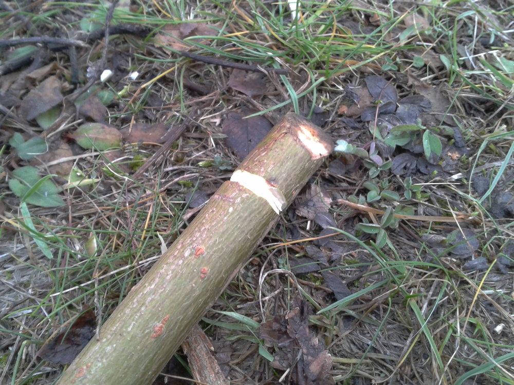Bushcrafting: Survival Schneeschuhe, Hinterer Rand