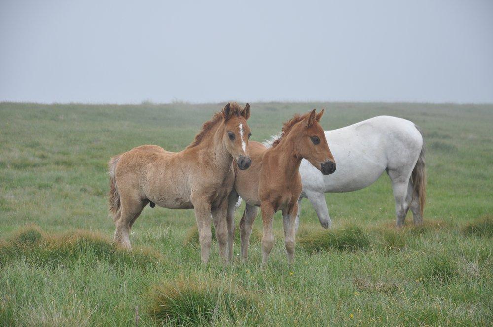 horse-3805727.jpg