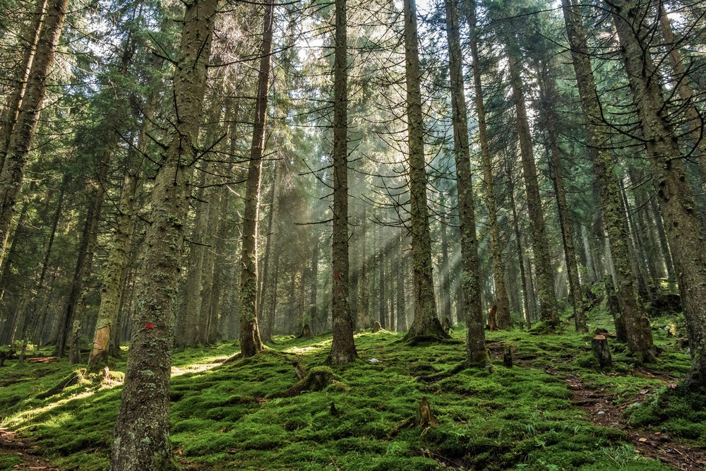 forest-967625.jpg