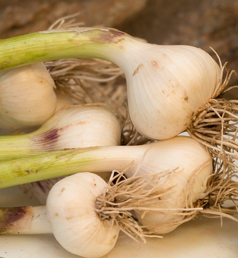 Garlic bulbs can have between six and twenty cloves.