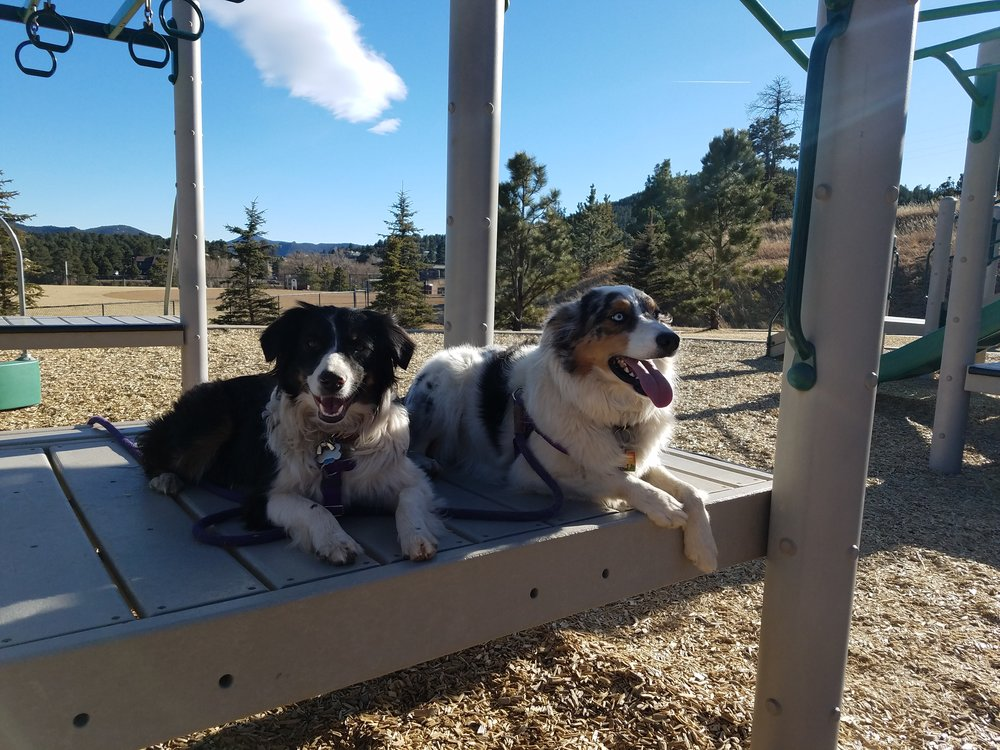 Force Free Positive Dog Training In Evergreen Colorado.