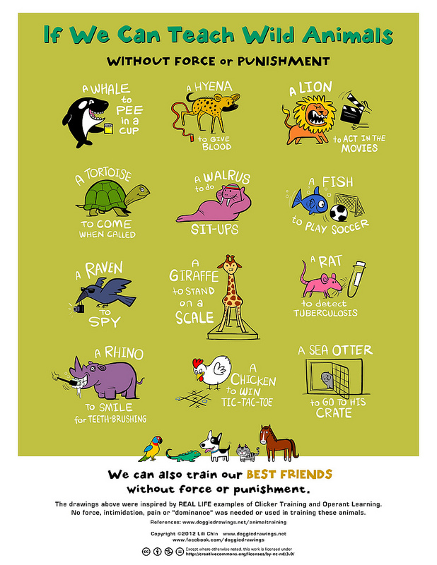 if-we-can-teach-wild-animals-poster.jpg