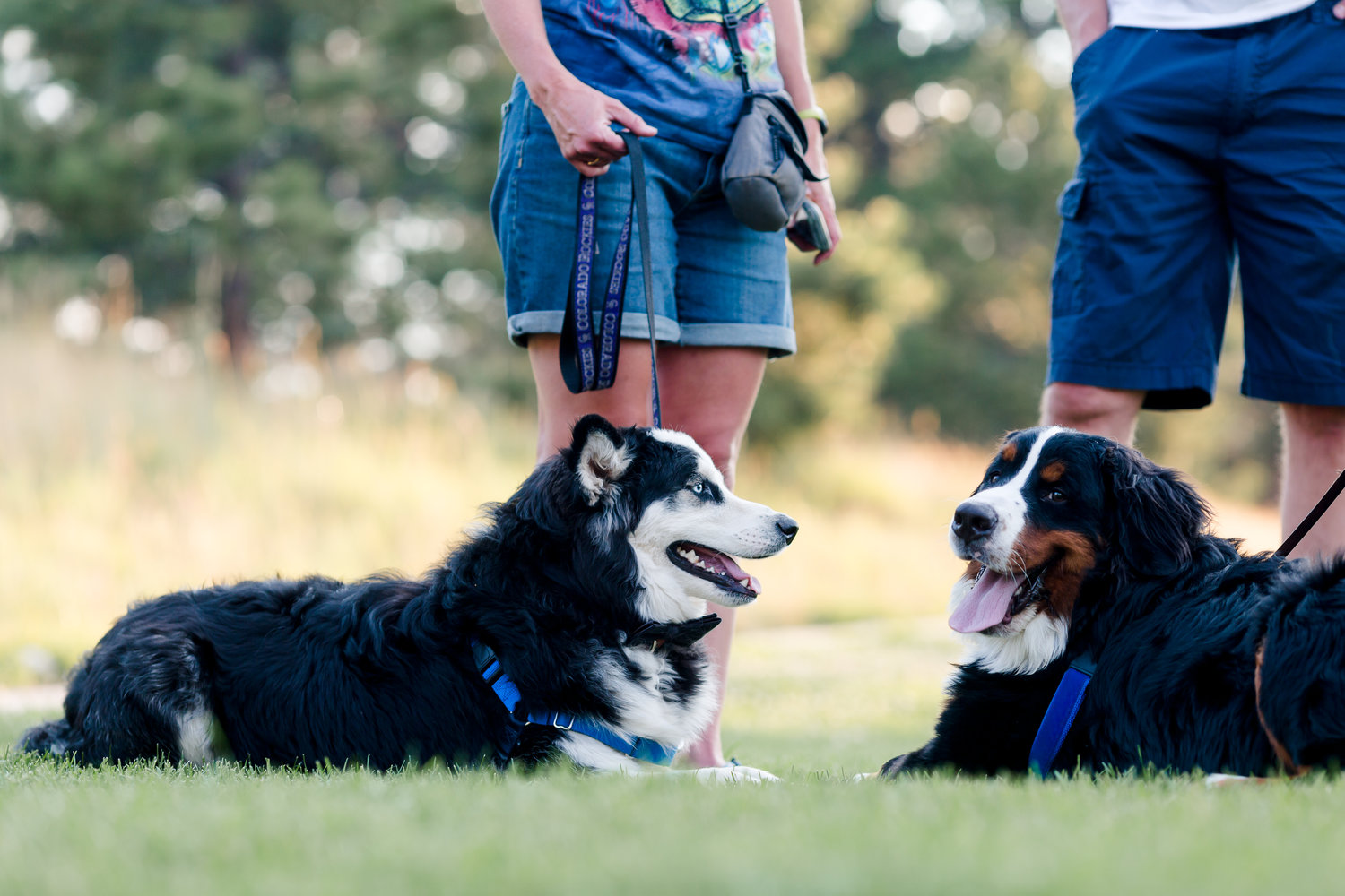 Our Trainers Friends For Life Holistic Pet Training Friends For