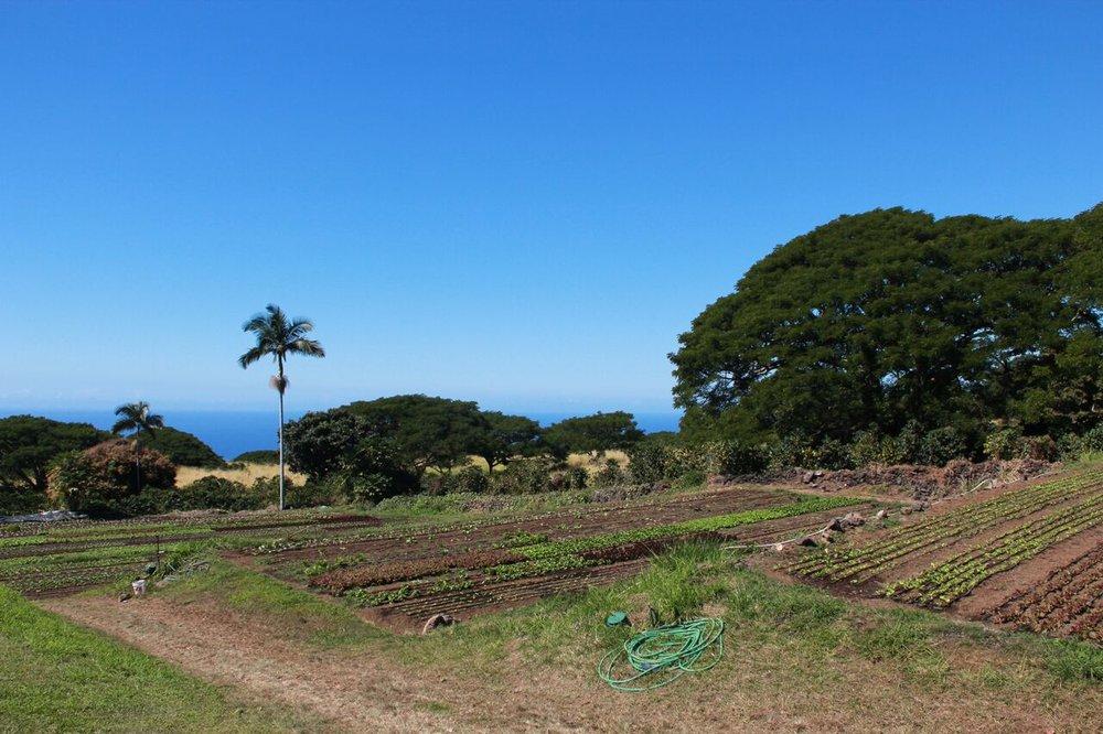 farmfarmfamr.jpeg