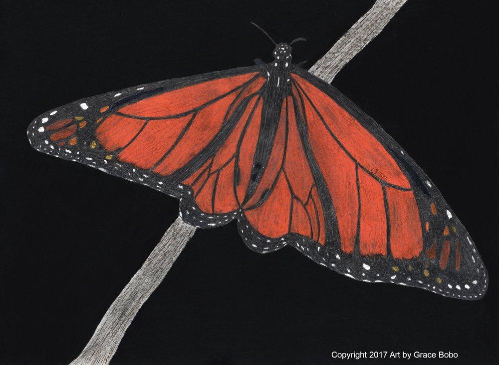 Monarch | Graphite & Colored Pencil | 14x11