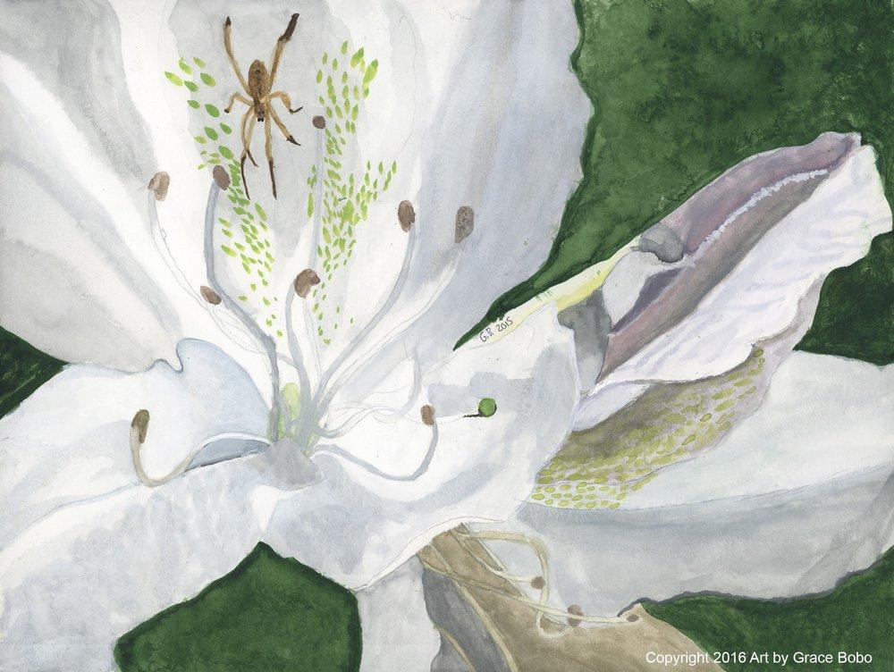 White Lily | Watercolor | 12x9