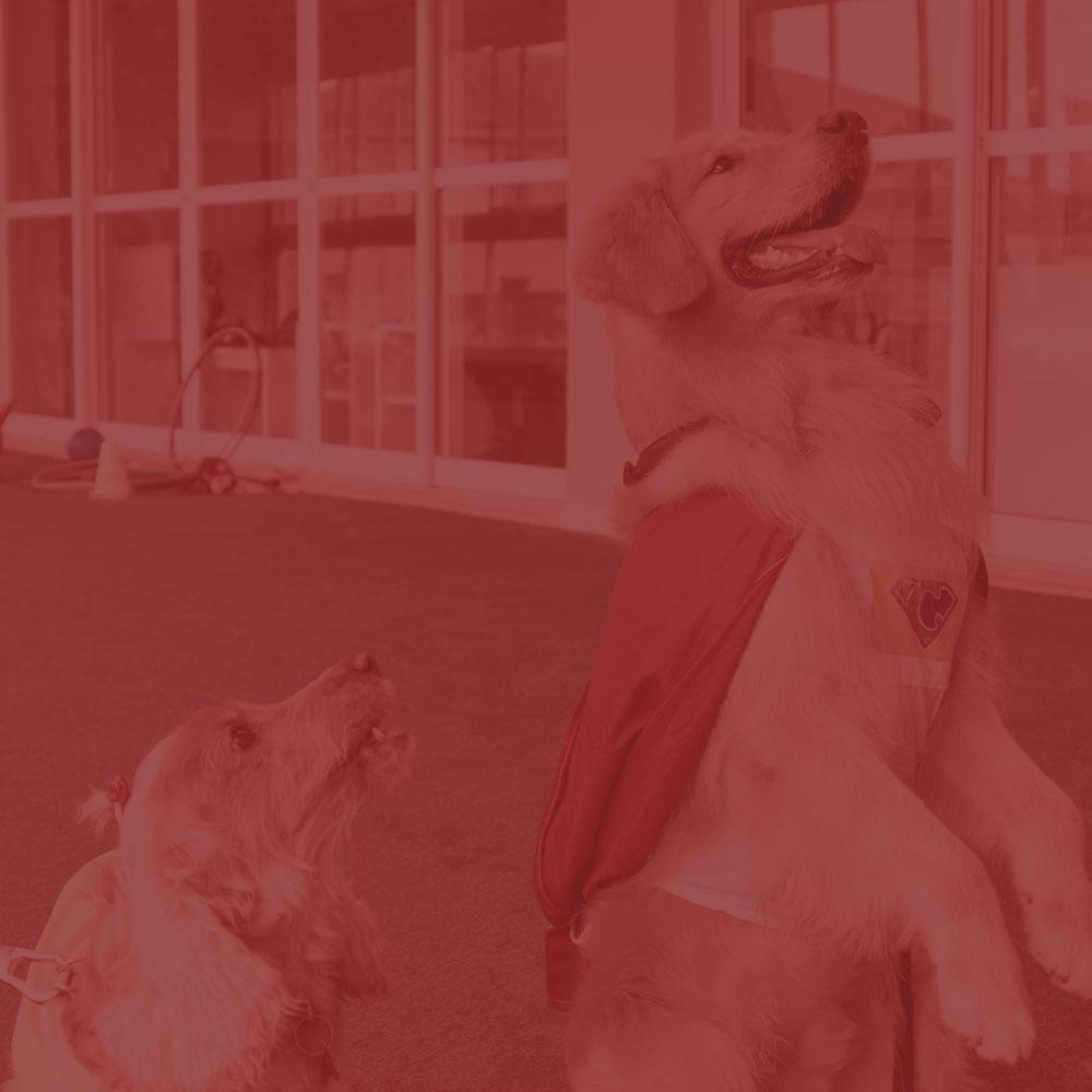 Liga Dog Hero - Ações que levam cachorros incríveis para alegrar o dia de pessoas em vulnerabilidade social.