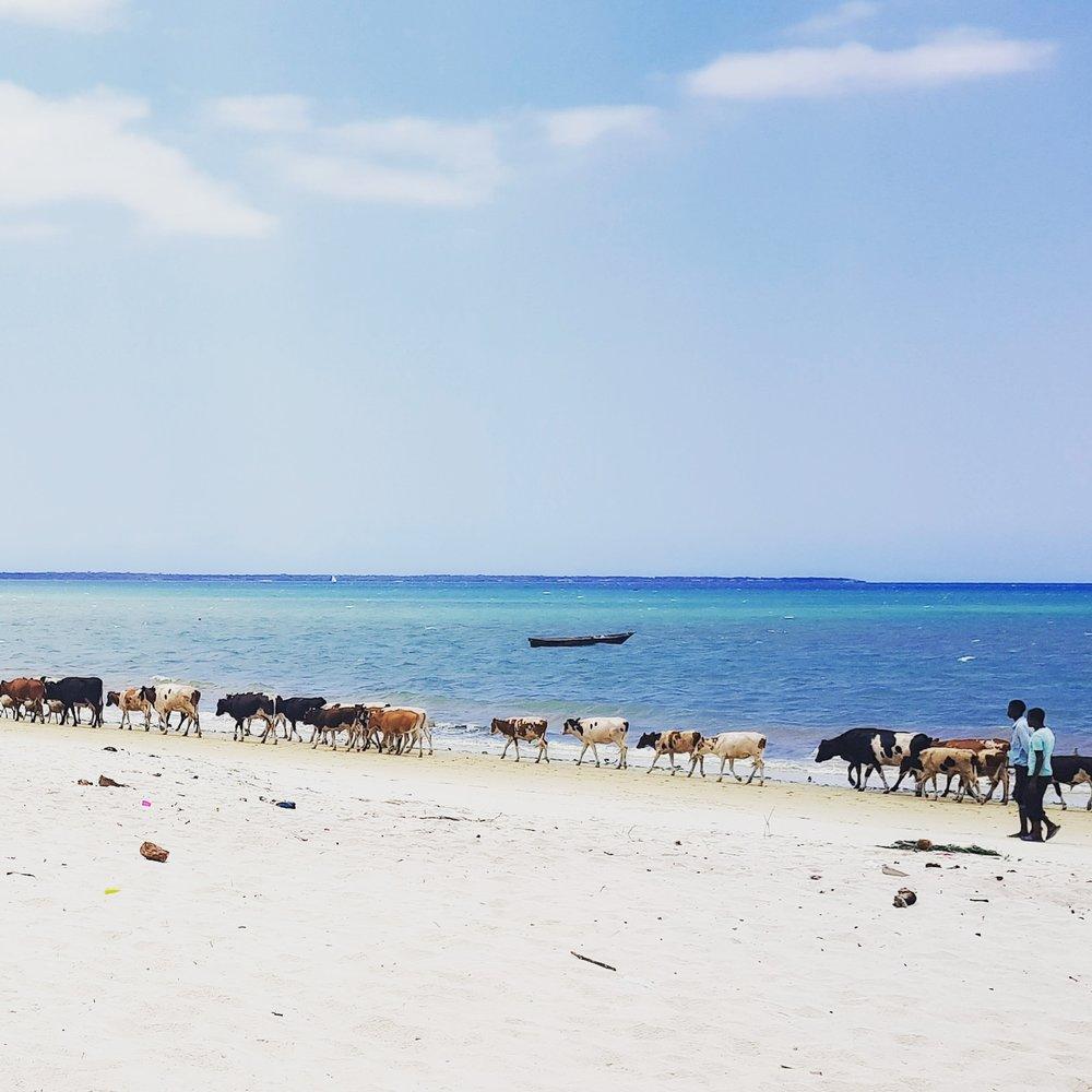 Kawe Beach, Tanzania.