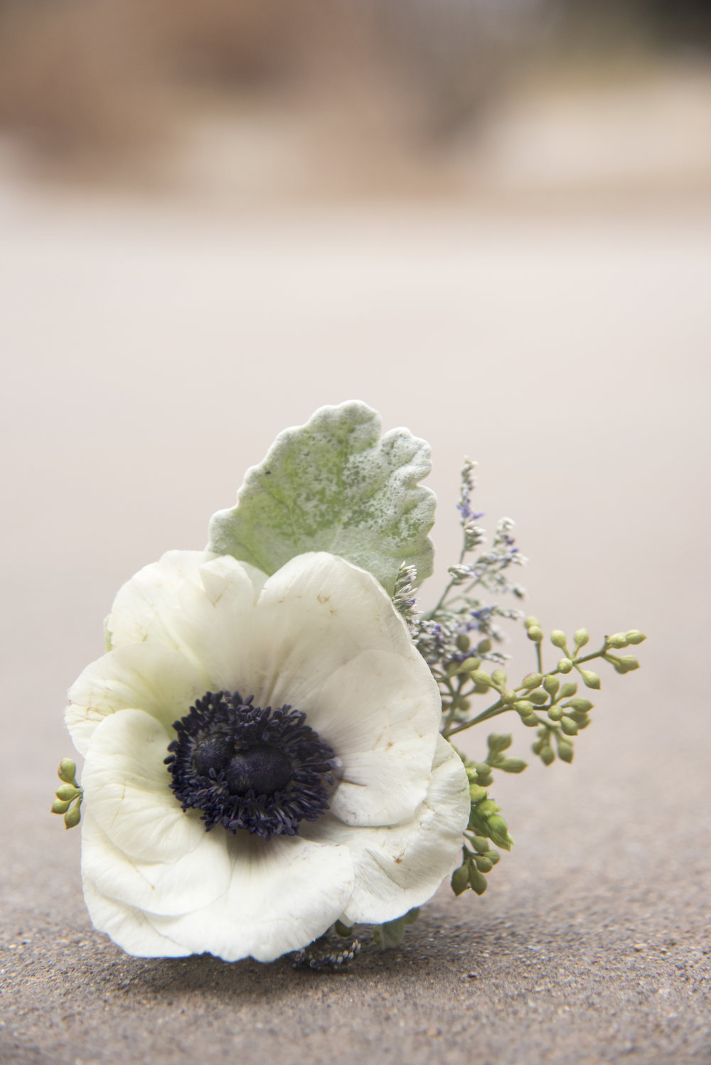 White flower close up | Mary and Brad's Outdoor Wedding Photography at Hudson Gardens | Colorado Springs, Colorado | Farm Wedding Photographer | Apollo Fields Wedding Photojournalism