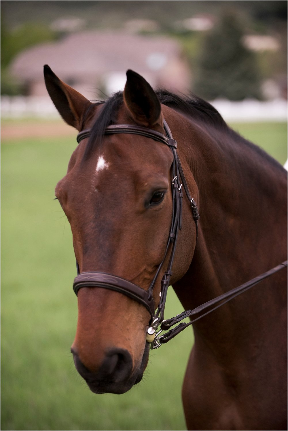 Horse_Photography_Equine_Equestrian_Photos_Portrait_Warmblood_005.jpg