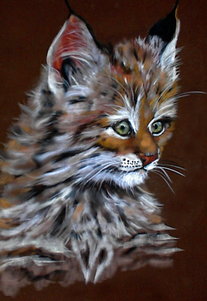 Fonda Haight - bobcat kitten.jpg